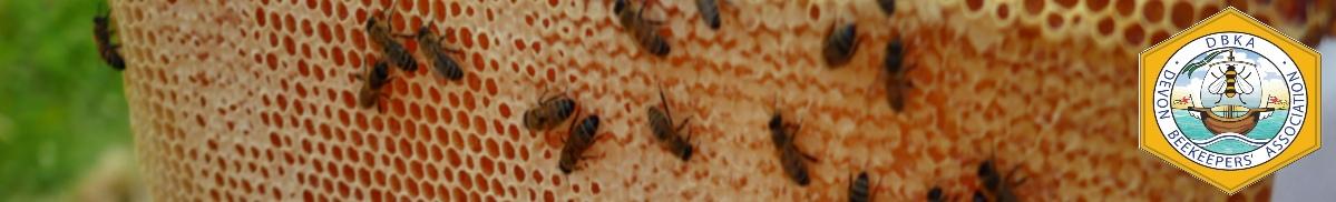 Exeter Beekeepers